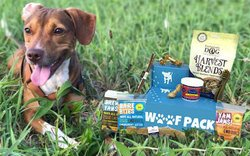 kai krates subscription box for dogs